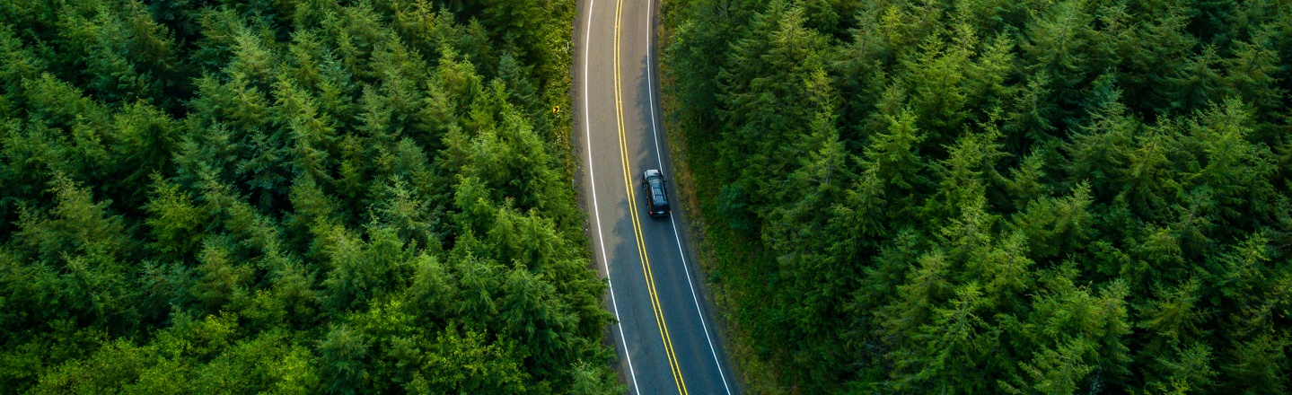Car driving on road in forrest
